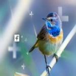 Logo da emissora Rádio Web Scalla Som Natureza