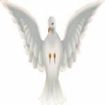 Logo da emissora Rádio Pássaro Ferido