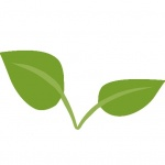 Logo da emissora Semente Original