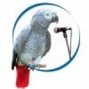 Freedom Radio Kano 99.5 FM